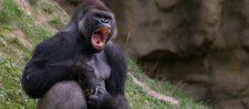 याद है दिल्ली का वो काला बंदर